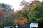 Leaf01