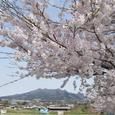 桜田圃子持山