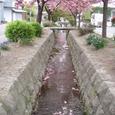 桜色に染まる水面