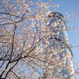 桜サージタンク