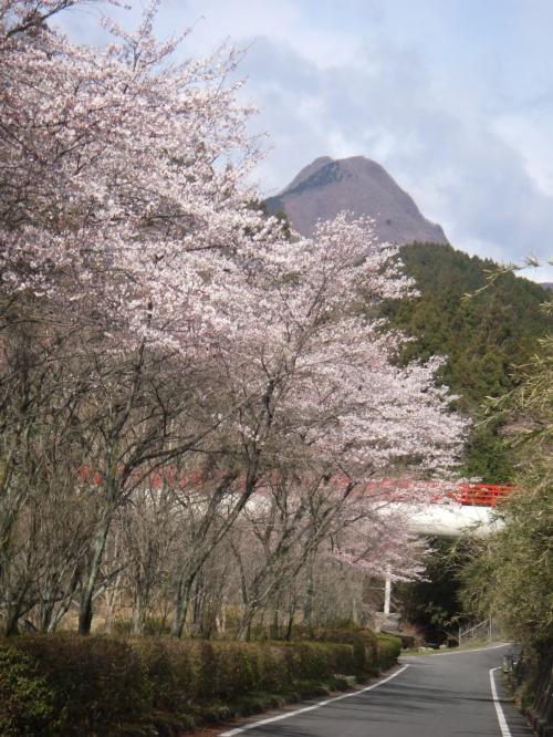 桜導水管水沢山